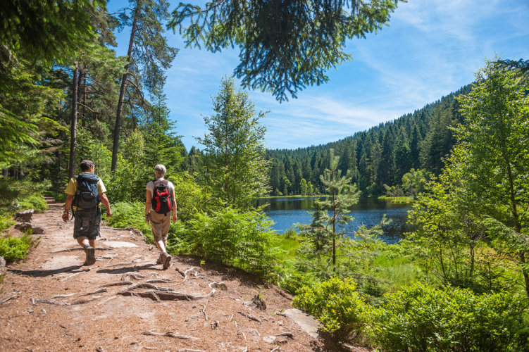 Schwarzwald-Wandern